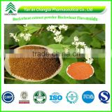 BV Certificated GMP Factory Supply High Quality Buckwheat extract powder Buckwheat Flavonoids