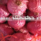 Red Onion India Exporter