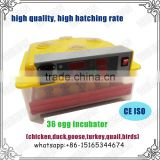 love bird egg incubator and brooder for sale in Indonisia WQ-36
