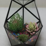 Air plant glass terrarium