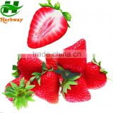 nature color strawberries / garden strawberry red color/ Fragaria ananassa Duch red pigment