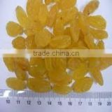 Supply AD Dried Golden Raisins with large amount