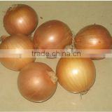 Fresh yellow onion , good quality Gansu origin