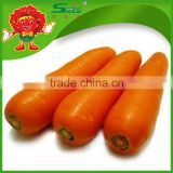 Yunnan factory bulk organic carrots tasty fruit and vegetables on sale