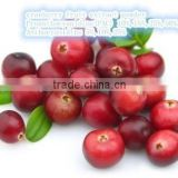Beverages ingredients cranberry fruit extract powder,cranberry proanthocyanidins,dried cranberry fruit powder