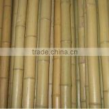 green plastic coated bamboo poles