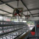prefabricated steel structure poultry house/light steel structure chicken house/light steel structural chicken shed