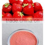 High Quality Food Grade organic strawberry powder/freeze dried strawberry powder/strawberry jelly powder