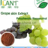 GMP Manufacturer 100% Natural grape skin extract powder-Polyphenols/Resveratrol