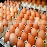 incubator paper molded pulp egg trays