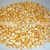 Non GMO Yellow maize/corn
