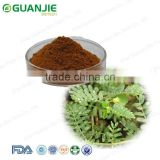 GMP manufacturer high quality 100% natural Healthy Dietary Supplement Tribulus Terrestris Extract