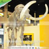 KAWAH Museum Resin Animal Skeleton Animated Realistic 3D Fiberglass Mammoth Fossil For Sale