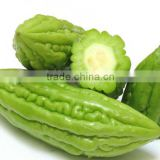 HOT PRODUCT FROZEN BITTER MELON HIGH QUALITY ANSD BEST PRICE