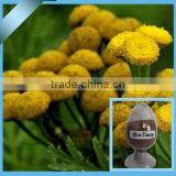 100% natural Tanacetum crassipes extract in bulk supply