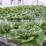 PVC Frame Material nft hydroponic gully