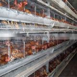 hot sale low price commercial auto water system egg laying poultry battery cage farm equipment breeding chicken cage