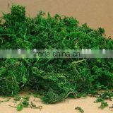 natural dried green moss