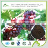 100% natural grape seed P.E./grape seed extract powder