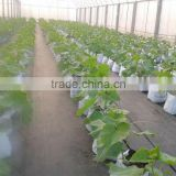 Heavy duty plastic pot for growing bag