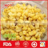Frozen vegetables of sweet corn kernels