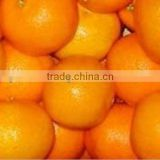 Pakistan Common Fresh Mandarin Orange