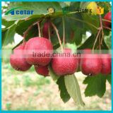 health analysis of hawthorn berry extract g s powder