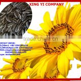 big size chinese sunflower seeds 5009 ton price