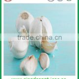 Jinxiang good quality fresh pure white garlic with great price