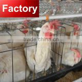 CHINA Cost price promotion hot galvanized quality layer chicken cage manure removal system