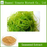 Factory Supply 100% Pure Natural Free Sample Seaweed Extract