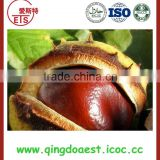 New crops Chinese raw chestnut in bulk