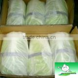 Chinese Cabbage Fresh cabbage