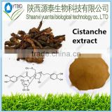 GMP Manufacture Supply Natural 100% Cistanche pure Tubulosa Extract