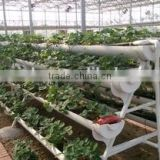 Hydroponic system for plant growth