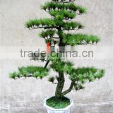 artificial pine tree ( plant bonsai flower / tree of DESTE )