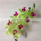 real touch orchid green decor orchid AAA quality china factory artificial orchid