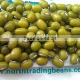 Mung Bean/Mung beans/green mung bean/green mung beans (sprouting type) 2013 crop,Jilin Origin.