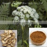 Top quality 100% natural Angelica Extract, Angelica root extract powder, Angelica root extract 10:1 20:1