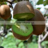 Fresh hayward kiwi china