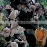 Mushroom extract black agaric extract--polysaccharides 25%