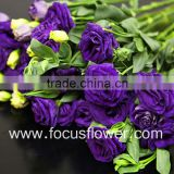Wide Varieties Reasonable Price Factory Direct Fresh Cut Flower Eustoma From Yunna Lisianthus From Yunnan