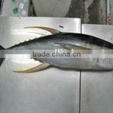tuna factory wholesale fresh frozen yellowfin tuna fish