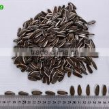 good quality striped sunflower seeds