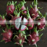 Dragon Fruit - White Flesh