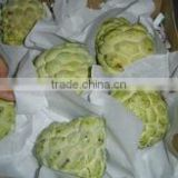 Egypt Fresh Custard Apple