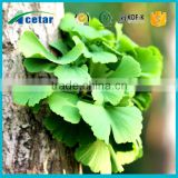 Sell 100%Natural High Quality Gingko Biloba Leaf Extract
