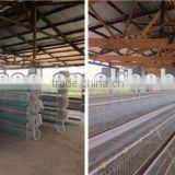 day old layer chicks broiler cage