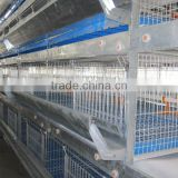 Automatic H type pullet rear cage