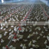 Inquiry about Poultry Farming Design from China Supplier